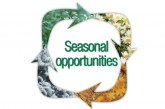 Seasonal Opportunities
